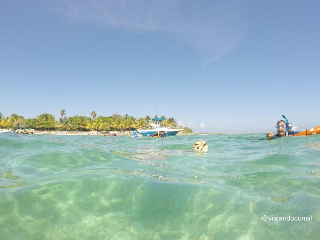 Tortugas-respirando-fuera-del-agua