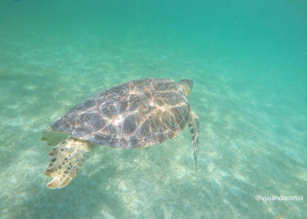 Agua-turquesa-y-tortugas-marinas