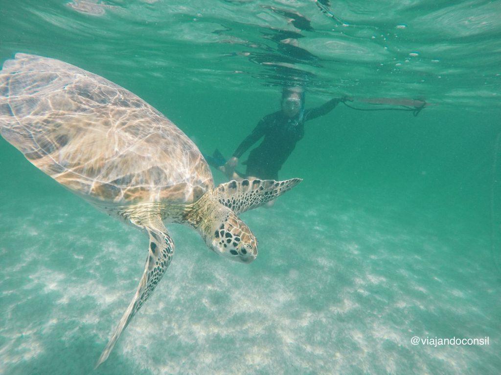 Nadar-con-Tortugas-marinas