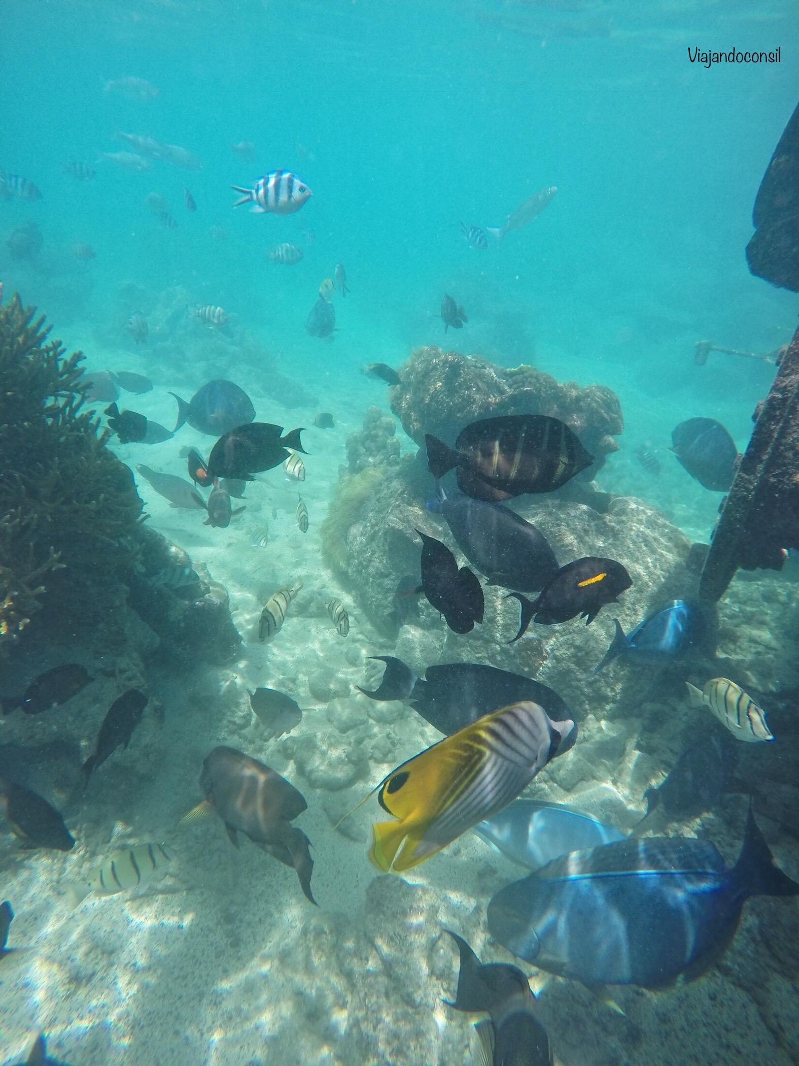 Jardin de coral Intercontinental