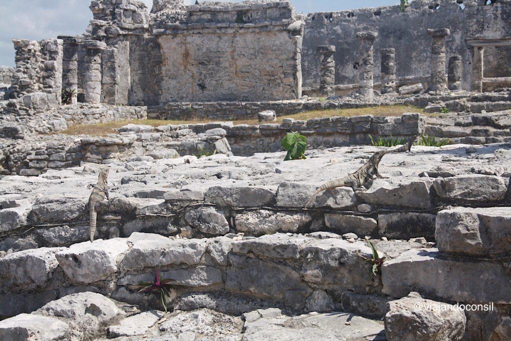 Ruinas e iguanas