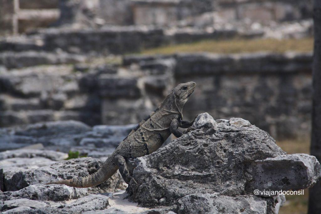 Iguana mirando al sol
