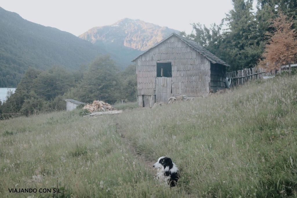 perro frente a una casa en el lago