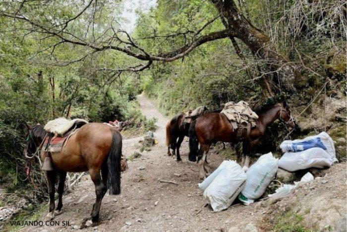 Caballos y pilcheros listos para salir hacia Paso El León