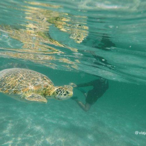 Tortugas en la bahía