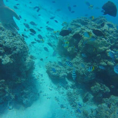 Jardín-de-coral-en-Bora-Bora