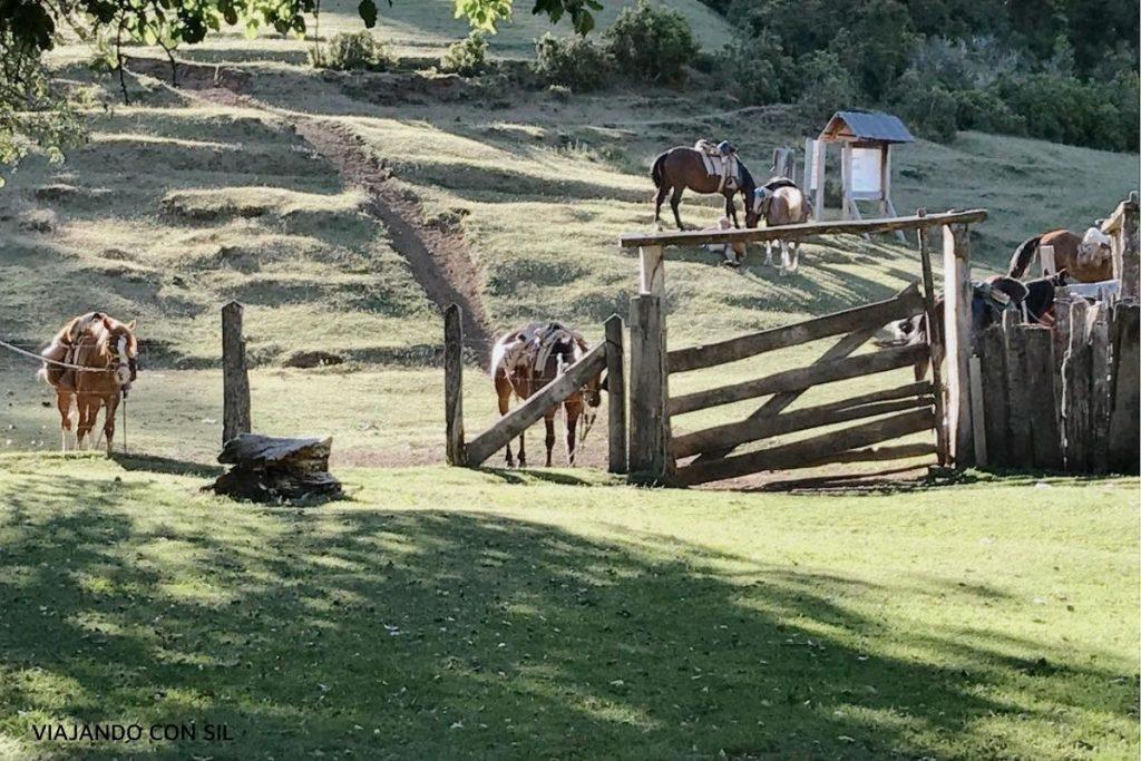 Caballos cabalgata Paso El Leon